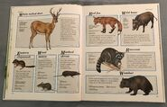 Macmillan Animal Encyclopedia for Children (9)