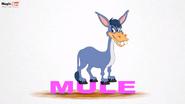 MagicBox Mule