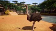 Ostrich planetzoo