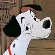 Pongo dalmatin dog