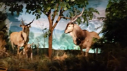 Rolling Hills Zoo Elands