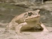 Amazing-animals-activity-center-toad