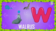 Baby Time Walrus