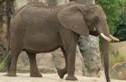 DAK Elephant