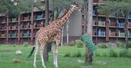 DAK Giraffe