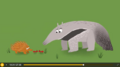 Echidnas Ants Termites Aardvarks and Anteaters
