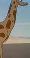 G-1941-04-18-giraffe