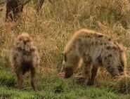 HugoSafari - Hyena14