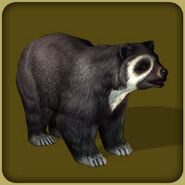 Spectacled Bear (Blue Fang)