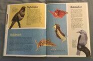 The Dictionary of Ordinary Extraordinary Animals (34)