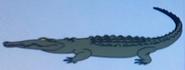 Batw-animal encyclopedia-caiman