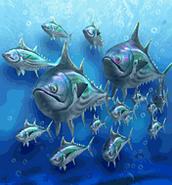 Bluefin Tuna ZT