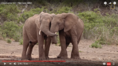 Nat Geo Wild Elephants