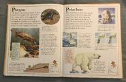 The Kingfisher First Animal Encyclopedia (53)