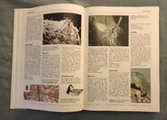 The Kingfisher Illustrated Encyclopedia of Animals (13)