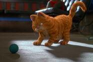 Furious Garfield