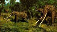 Mastodons and Early Elephants