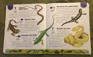 Reptiles and Amphibians Dictionary (8)