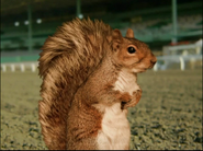 SBSQ Real Squirrel