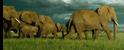 SRNGTI Elephants