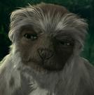 Yar the Lemur