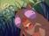 Congo tarsier2