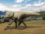 Dm montanoceratops