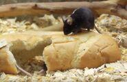 Mouse in arizona's wildlife world zoo
