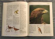 The Kingfisher Illustrated Encyclopedia of Animals (62)