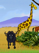 African Cape Buffalo and Giraffe in Hokus Pokus Pink