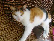 Calico cat - bright.jpg