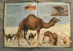 Mammals (Eye Wonder) (14).jpeg