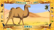ABC Camel