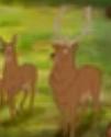 AMC Theaters Elk