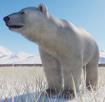 Bear, Polar (Planet Zoo)