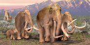 Columbian Elephants