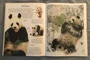 DK Encyclopedia Of Animals (125)