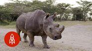 Guarding the Last Three WHite Rhinoceroses