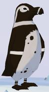 Humboldt Penguin WOZ