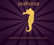 IMG seahorse