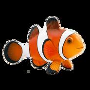 NatureRules1 Clownfish