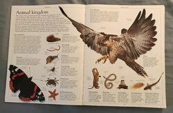 DK Encyclopedia Of Animals (2).jpeg