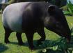 Tapir, Malayan (Planet Zoo)