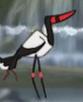 Tarzan Saddle-Billed Stork