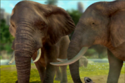 Zoo Tycoon 2013 African Bush Elephants