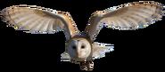 Barn Owl Flying2