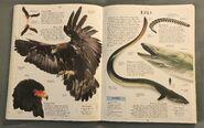 DK Encyclopedia Of Animals (74)