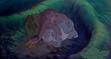 Littlefoot Cera Petrie Ducky and Spike Sleeping