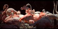 San Diego Zoo Flamingos