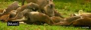 Serengeti Mongooses